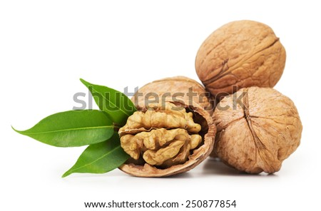 Walnut closeup isolated on white background