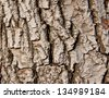 walnut tree - skin of old tree - stock photo