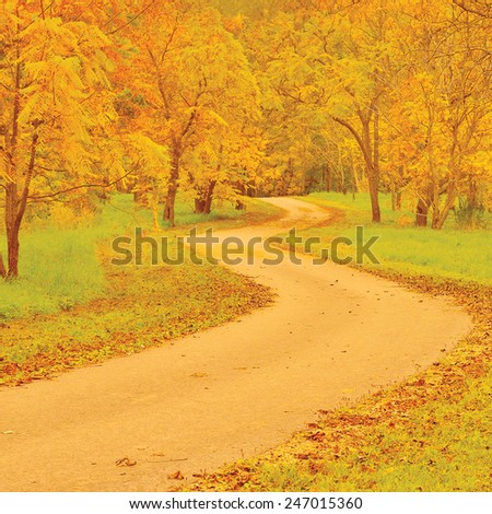 Walnut trees footpath autumn colorful yellow red leaves large detailed outdoor scene old pathway woods tarmac asphalt trail, peaceful tranquil arboretum garden park walk pavement road forest landscape - stock photo