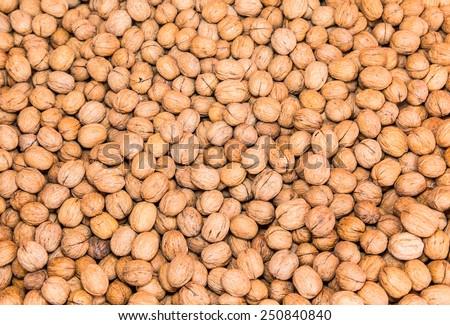 Walnuts in shells - stock photo