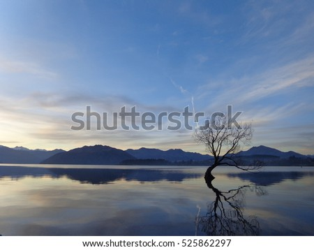 Wanaka lake lonely tree beautiful blue crystal clear water at sunset