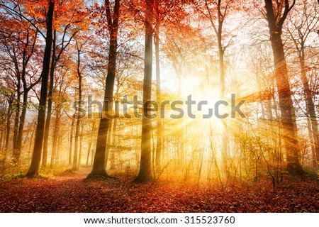 Warm autumn scenery in a forest, with the sun casting beautiful rays of light through the mist and trees - stock photo