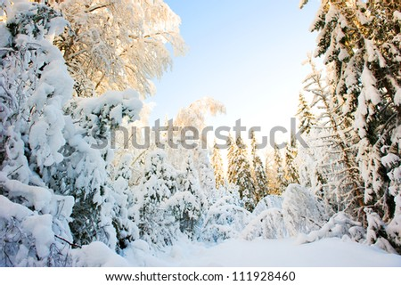 Warm cold winter sun in swedish forest - stock photo