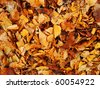 Warm colors of Autumn. Maple leaves covering the ground. - stock photo