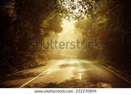 warm light falling on a road in a dark forest