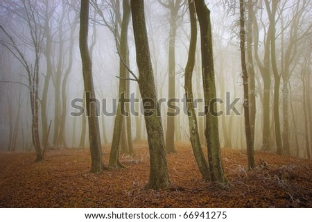 warm light  in a beautifully colored forest in winter - stock photo