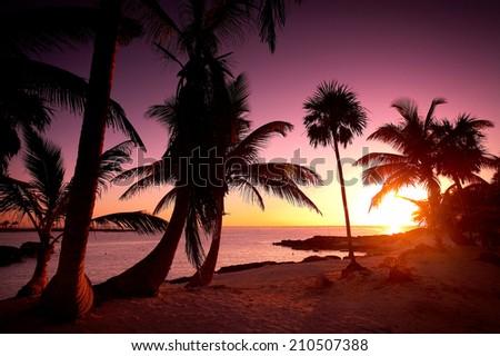 Warm Palm tree Sunrise | Mayan Riviera, Mexico - stock photo