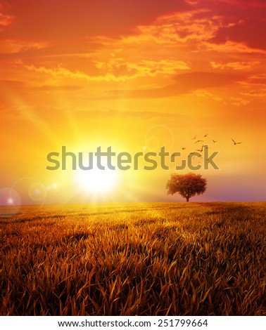 Warm sunset on the wild meadow. Intense sun setting down on a peaceful grass field with a flight of birds - stock photo