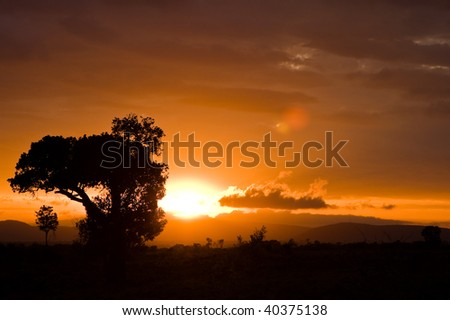warm sunset serengeti