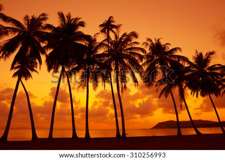 Warm tropical sunset on ocean shore with palm trees silhouette
