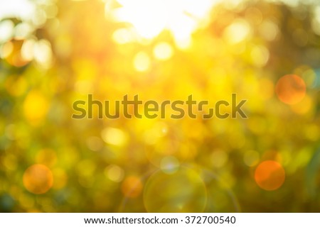 Warm yellow golden color tone blurred nature background of a view looking up through the orange foliage of a tree against the sky facing sun flare and bokeh: Blurry natural greenery bokeh - stock photo