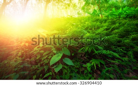 Warm yellow sunlight shines through leaves and tree branches inside in tropical forest. Beautiful green nature background - stock photo