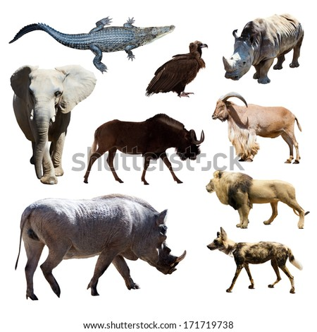 Warthog and other African animals. Isolated over white background  - stock photo