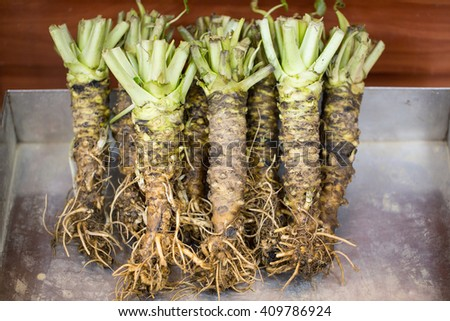 Wasabi root Japanese spice raw fresh vegetable food. - stock photo