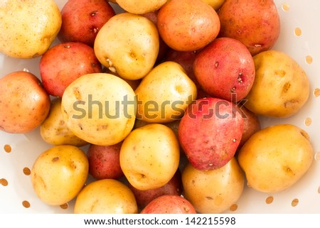 Washed Golden and Red Baby Potatoes in White Colander - stock photo