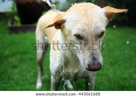 Washing adorable dog at the yard, Healthcare  lifestyle - stock photo