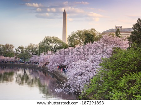 Date of cherry blossom festival in washington dc