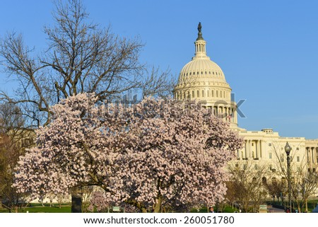 Washington DC in spring - Capitol building among blossoms - stock photo