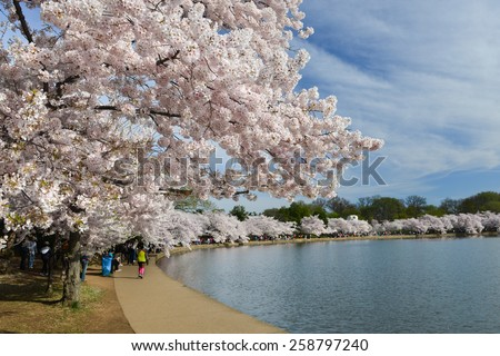 Washington DC in Spring - Cherry Blossoms at Tidal Basin - stock photo
