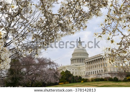 Washington DC in Spring - The Capitol
