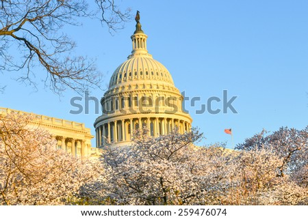 Washington DC in Spring - The Capitol building and  blossoms  - stock photo