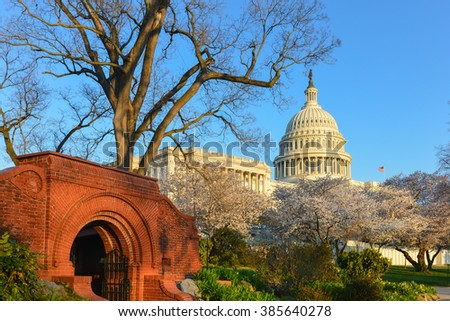 Washington DC in Spring time - Capitol Building and spring blossoms - stock photo