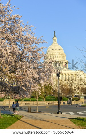 Washington DC in Spring time - Capitol Building with spring blossoms - stock photo