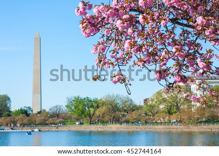 Washington DC landmark the Monument background and cherry blossom event