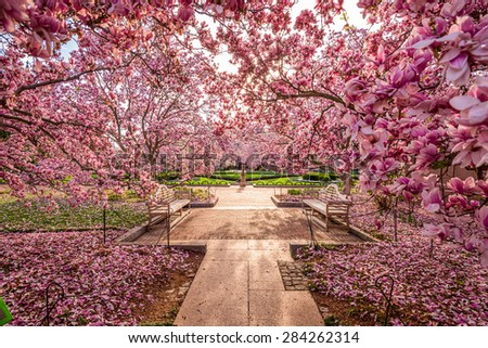 Washington DC spring foliage near the National Mall. - stock photo