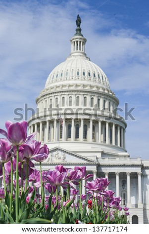Washington DC, tulips in front of the Capitol building in spring  - stock photo