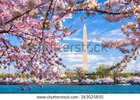 Washington DC, USA at the tidal basin with Washington Monument in spring season. - stock photo
