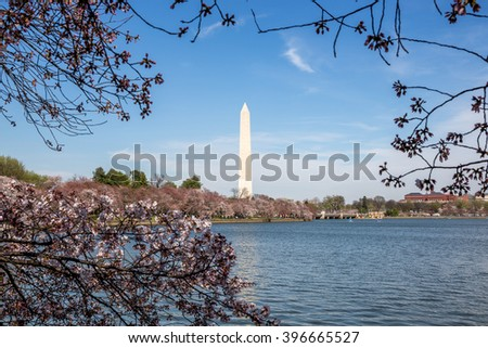Washington Monument and cherry blossom in Washington D.C.