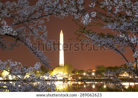 Washington monument during cherry blossom, DC