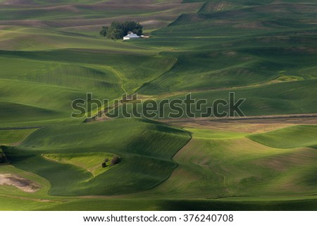 Washington Palouse. The palouse area is a major agricultural area, primarily producing wheat and legumes. The picturesque loess hills of the the Palouse Prairie can be viewed from Steptoe Butte Park. - stock photo