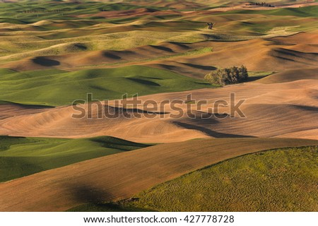 Washington Palouse. The Palouse area is located in Eastern, Washington. Steptoe Butte State Park offers panoramic views of nearby farmlands, the Blue Mountains, and other neighboring ranges and peaks.