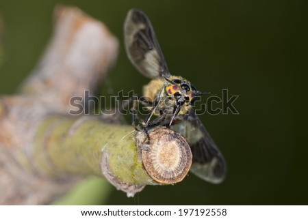 Wasp bee multicolor eye on wood background - stock photo