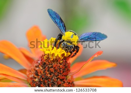 Wasp collecting pollen from a flower of the tree - stock photo
