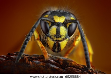 Wasp detailed portrait - stock photo