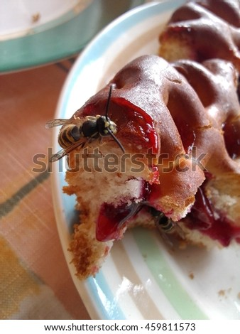 Wasp Eating Jam Sitting on Cherry Pie.