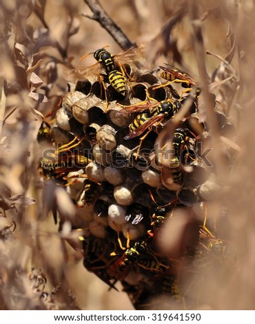 Wasp nest amidst the bushes, mid summer - stock photo