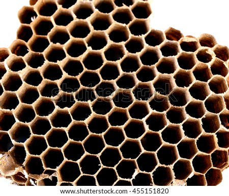 Wasp nest colony on white background - stock photo