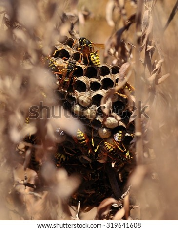 Wasp nest hidden amidst the bushes - stock photo