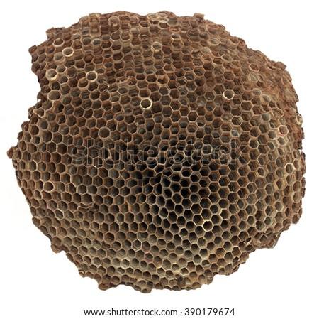Wasp nest over white background - stock photo