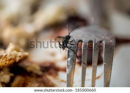 Wasp on the fork - stock photo