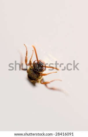 wasp ( shallow dof ) - stock photo