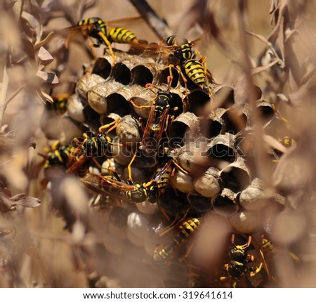 Wasps around the nest amidst the bushes - stock photo