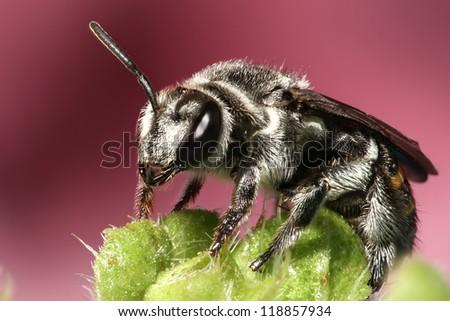 Wasps / hornet - stock photo