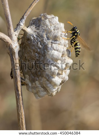 Wasps in the nest - stock photo