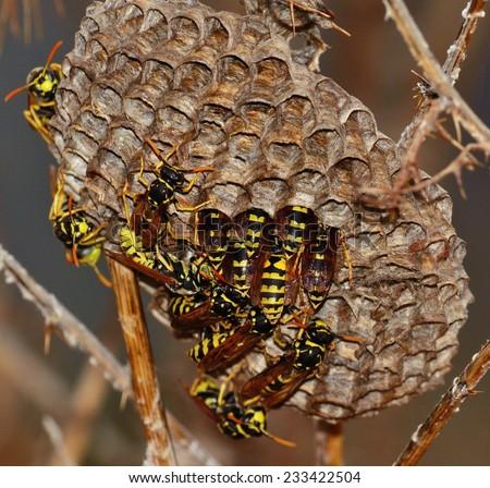Wasps inside the nest - stock photo