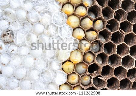 Wasps nest - stock photo